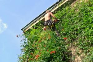 4. Úprava zelené fasády domu v Itálii_Starwork