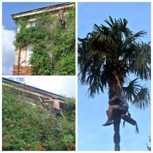 6. Úprava zelené fasády domu v Itálii_Starwork